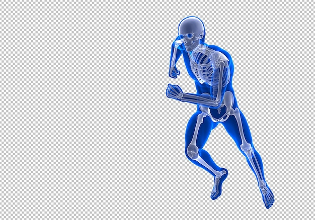 Running squelette humain mâle randering