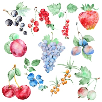 Set de fruits aquarelle