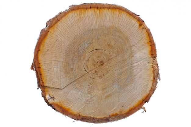 Texture du tronc d'arbre coupé