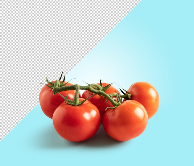 Tomate sur fond bleu avec espace de copie