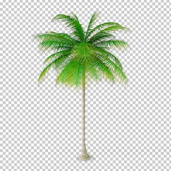 Usine de noix de coco isométrique en pot rendu 3d