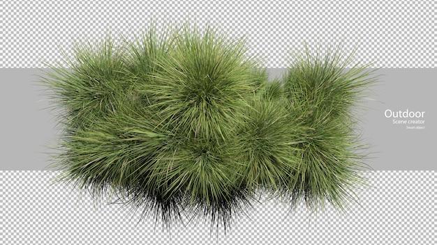 Variété d'herbe dispersé d'herbe
