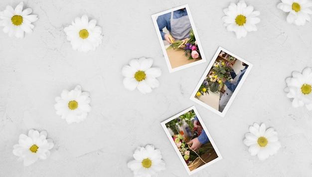 Vue de dessus de la camomille de printemps avec photos