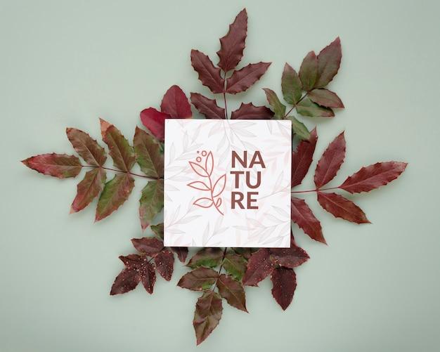 Vue de dessus les feuilles de la nature avec maquette