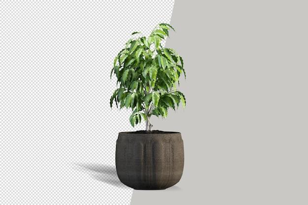 Vue isométrique de la plante 3d