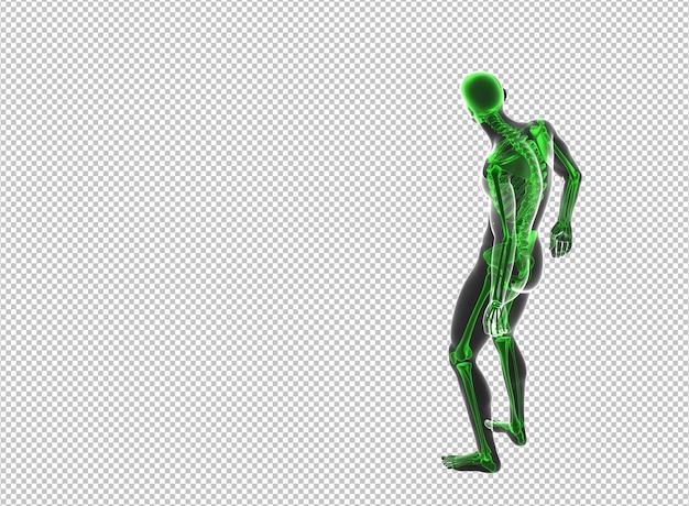 Vue postérieure, de, mâle, homme, squelette, randering