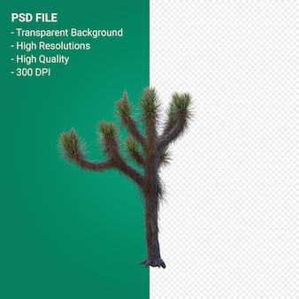 Yucca brevifolia rendu 3d design réaliste isolé