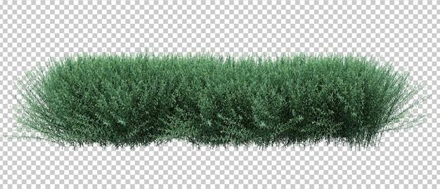 3d render brush bush isolated