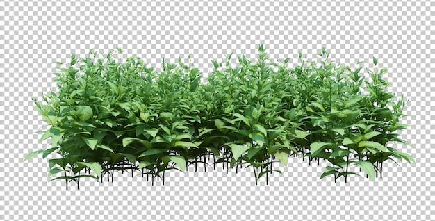 3d render grupo de plantas isoladas