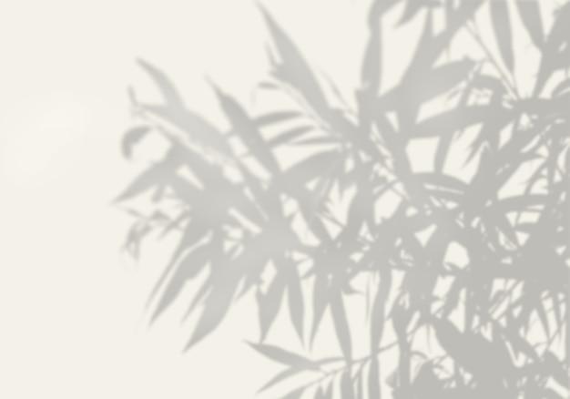 A sombra de uma planta exótica em uma parede branca.