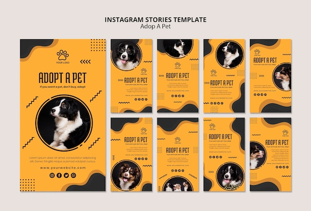 Adote um animal de estimação border collie dog instagram stories