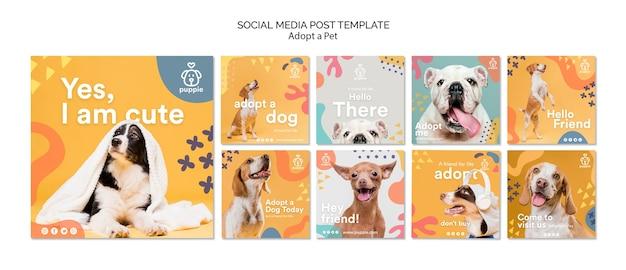 Adote uma publicação de mídia social para animais de estimação