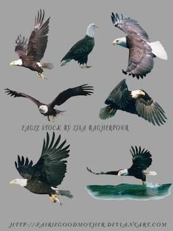 Águias voando psd