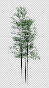 Árvore de bambu de objeto de natureza isolada no branco
