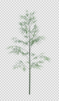 Árvore de bambu natureza objeto isolada
