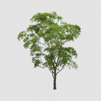 Árvore de eucalipto com fundo isolado, render 3d da árvore