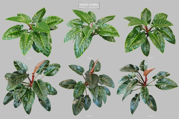 Árvore de filodendro esmeralda vermelha realista