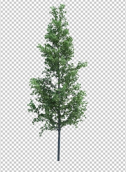 Árvore de objeto natural isolada