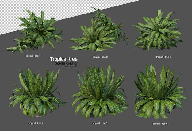Árvores e plantas tropicais em renderização 3d