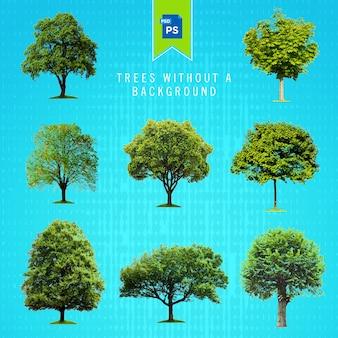 Árvores isoladas sem um fundo
