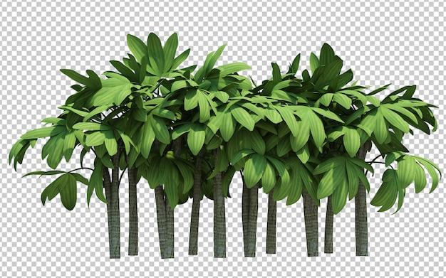 Árvores lindamente detalhadas isoladas
