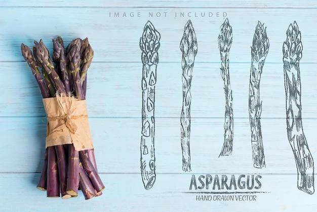 Cachos de lanças de aspargos roxos orgânicos crus, cultivados em casa, para cozinhar alimentos saudáveis, dieta vegetariana, cópia espaço conceito vegano