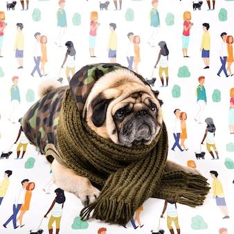 Cão bonito coberto com roupas de inverno