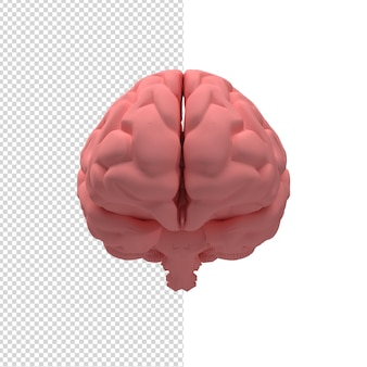 Close-up no cérebro 3d isolado premium psd
