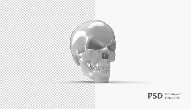 Close-up no crânio isolado