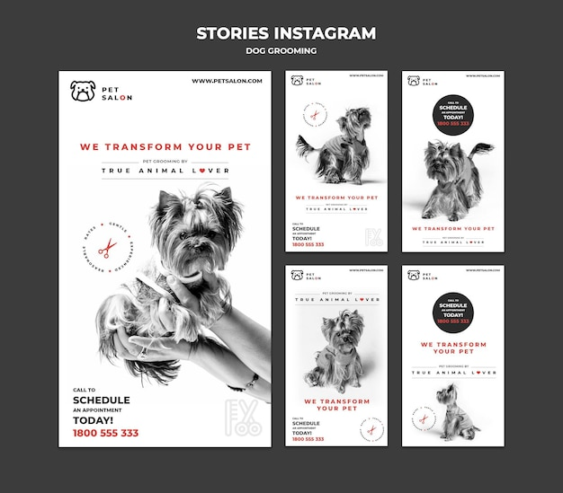 Coleção de histórias do instagram para empresa de cuidados com animais de estimação