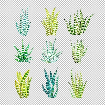 Coleção de plantas cobras em aquarela