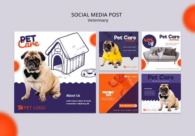 Coleção de post de mídia social para cuidados com animais de estimação