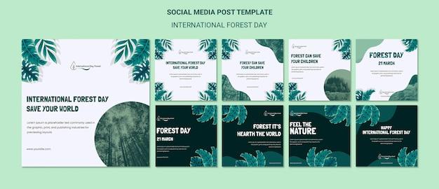 Coleção de postagens do instagram para a celebração do dia da floresta internacional