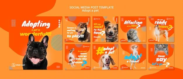 Coleção de postagens do instagram para adoção de animais de abrigo