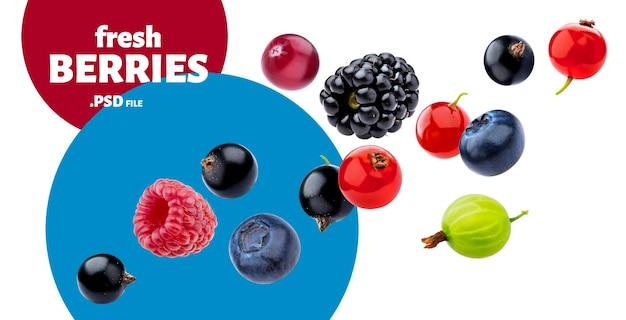 Coleta de frutas silvestres em queda isolada