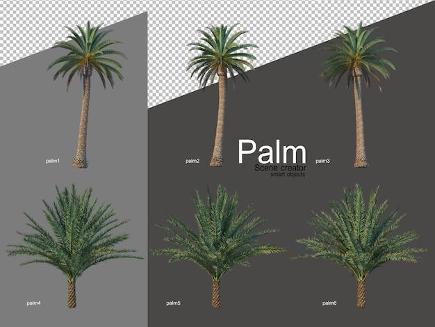 Conjunto de arranjos de palmeiras