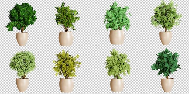 Conjunto de decoração de plantas