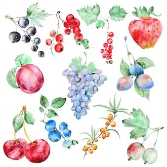 Conjunto de frutas em aquarela