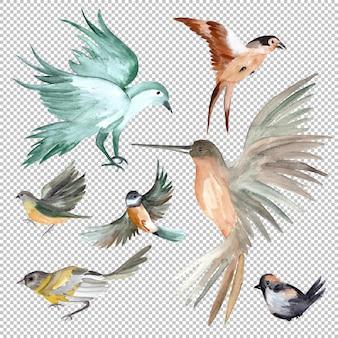 Conjunto de ilustração de pássaros em aquarela
