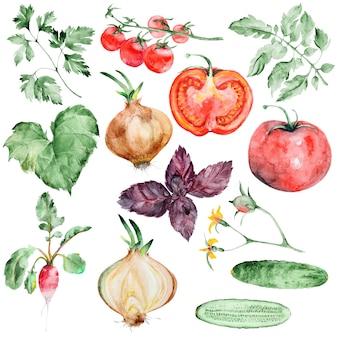Conjunto de legumes em aquarela
