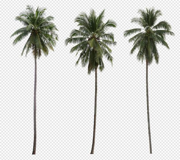 Conjunto de palmeira de coco realista isolado