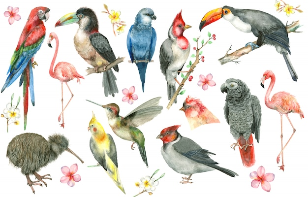Conjunto de pássaros tropicais