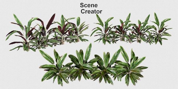 Conjunto de renderização de arranjos de palmeiras