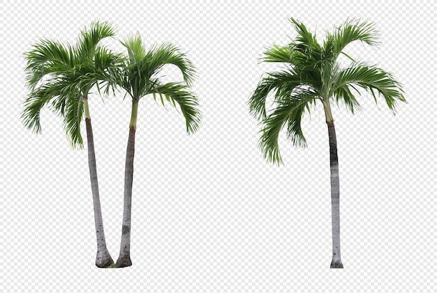 Conjunto realista de palmeiras de manila isolado