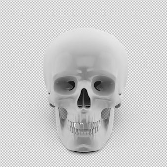 Crânio isométrica 3d isolado render