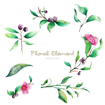 Elemento floral da aguarela
