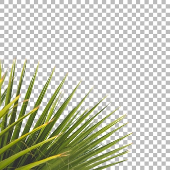 Fechar vista de fundo de planta verde fresca