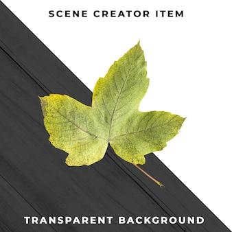 Folha de madeira transparente psd