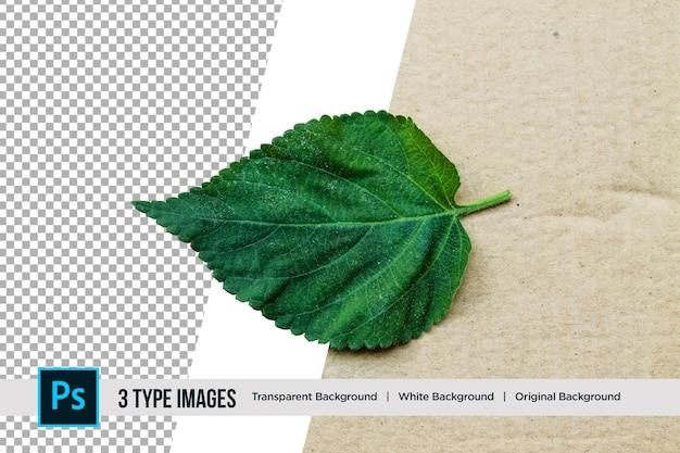Folha verde bela natureza com 3 diferentes tipos de plano de fundo