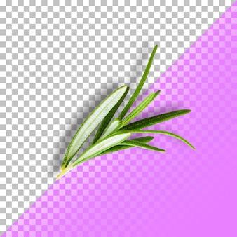 Folhas de alecrim isoladas em fundo transparente. psd